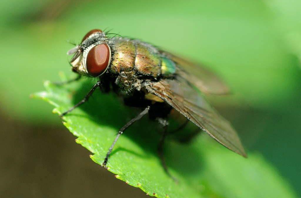 Top 5 Methods to Avoid the Summer Flies